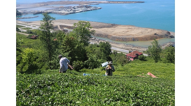 Açıklanan çay fiyatı Rizelileri ikiye böldü