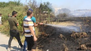 Antalya'da çıkan yangında 20 dönüm zarar gördü