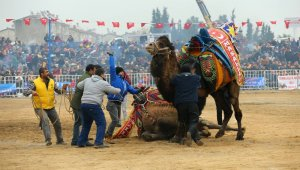 Aydın deve güreşleri Londra'da tanıtıldı
