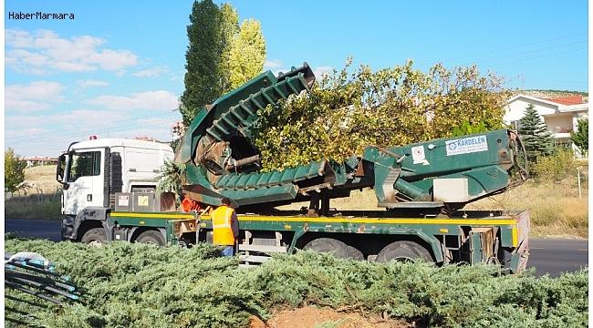 Ankara Büyükşehir'den ağaç hassasiyeti