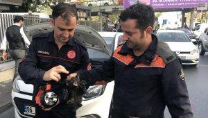 Beşiktaş'ta itfaiye ekiplerinden yavru kedi kurtarma operasyonu