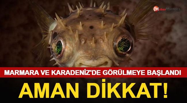 Denizde Büyük Tehlike! Marmara ve Karadeniz'de Görülmeye Başlandı