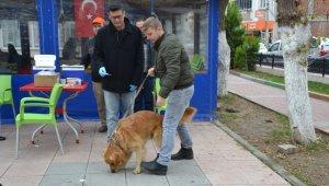 Biga'da kedi ve köpekler kuduza karşı aşılanıyor