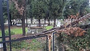 Fırtına ağaçları yere serdi