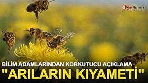 Bilim Adamlarından Korkutucu Açıklama: Arıların Kıyameti...