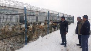Çaldıran'da sokak köpekleri barınakta besleniyor