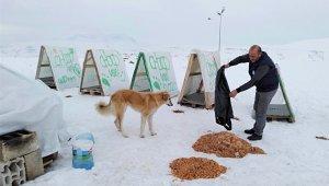 Edremit Belediyesi ile Ahbap Derneği'nden sokak hayvanlarına Sıcak Yuva
