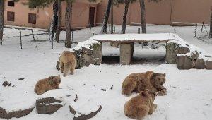 Hayvanat bahçesindeki ayıların kar keyfi