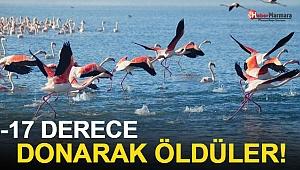 İvriz Baraj Gölü'nde 12 Flamingo Ölü Bulundu!