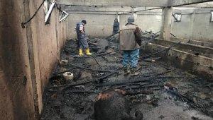 Ordu'da ahır yangınında 13 hayvan telef oldu