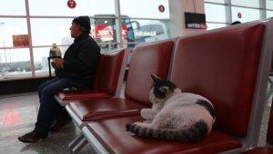 Otobüs terminalini mesken tuttu, terminalin maskotu oldu