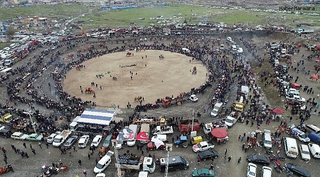 Salihli'deki deve güreşi festivali 23 Şubat'ta yapılacak