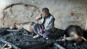 Yangında telef olan kuzuları için hüngür hüngür ağladı