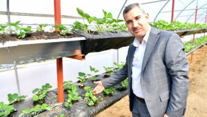 Başkan Çınar, Yeşil Gıda Seracılık Projesini inceledi