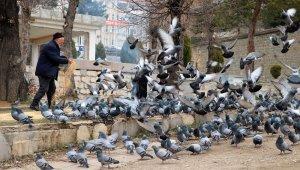 Korona virüs güvercinleri de etkiledi
