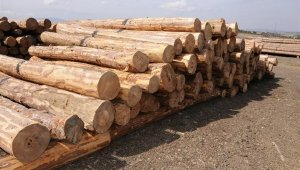 Kütahya Orman Bölge Müdürlüğünde E - Satış uygulaması