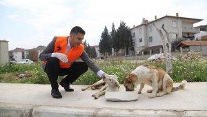 Menderes'te sokak hayvanları unutulmadı