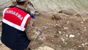 Yaralı Balaban kuşuna jandarmadan şefkat eli