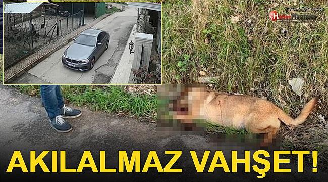 Akılalmaz Vahşet! Bir Köpeği Başından Vurdu, 2 ...