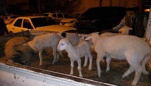 Aliağa'da çiftçinin koyunlarını gasp eden 5 kişi tutuklandı