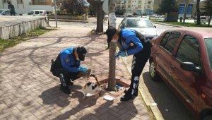 Elazığ polisi, sokak hayvanları için görevde