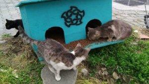 Süleymanpaşa Belediyesi sokak hayvanlarına sahip çıkıyor