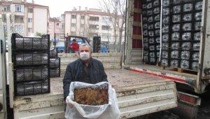 Tarım şehri Amasya'da çilek yetiştiriciliğine destek