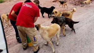 Adapazarı Belediyesi bayramda da sokak hayvanları unutmadı