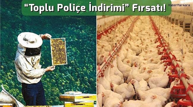 Arı yetiştiricileri ve kanatlı hayvan üreticilerine 'toplu poliçe indirimi' fırsatı