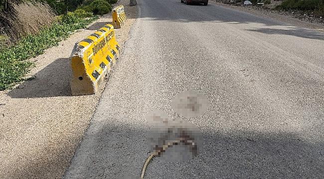 Artan yılan ölümleri tedirgin ediyor