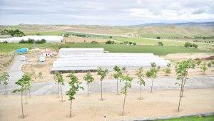 Beypazarı'nda meyve yetiştiriciliğinin önünü açacak dev projede büyük başarı