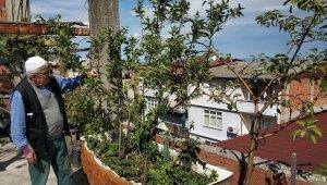 Botanik bahçesi gibi teras: 183 kök meyve var