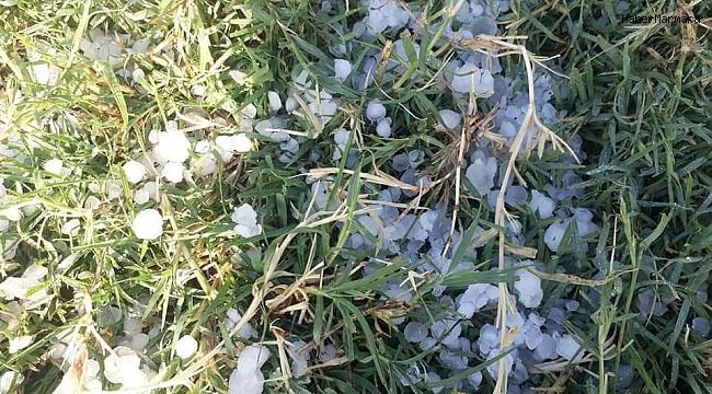 Dolu yağışı ekinlere zarar verdi