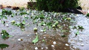 Dolu yağışı meyve ağaçlarını vurdu