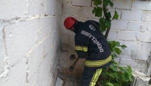 Duvar arasında kalan yavru kedi için itfaiye seferber oldu
