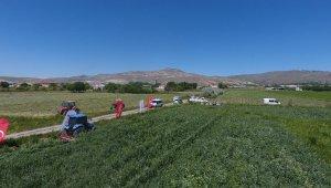 Kayseri'de yem bezelyesinin ilk hasadı başarı ile yapıldı