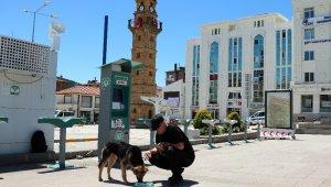 Kısıtlama nedeniyle aç kalan sokak hayvanlarını elleriyle besledi