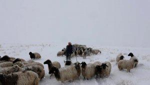 Koyunlarını yaylaya çıkaran vatandaşa Mayıs ayında kar ve tipi sürprizi