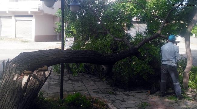 Kozan'da şiddetli fırtına ağaçları devirdi
