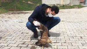 Küçük Balaban kuşu ve 1 Kızıl Şahin tedavi altına alındı