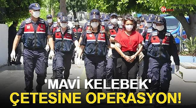 'Mavi Kelebek' çetesine operasyon! 24 tutuklama