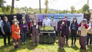 Mersin'de 100 bin lavanta fidesi dağıtıldı