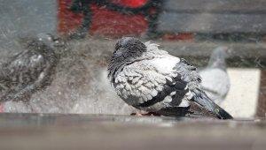 Meydanlar boş kaldı, yüzlerce güvercin böyle yıkandı