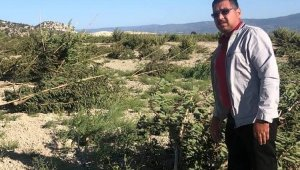 Mut'ta fırtına meyve ağaçlarına zarar verdi