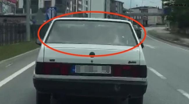 Arabanın arka koltuğunda inek taşıdı