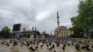 Trabzon'un Akçaabat ilçesinde meydan güvercinlere kaldı