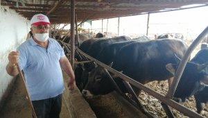 Amasya'da el sıkışmadan 'değnekle' kurban pazarlığı