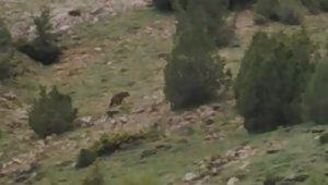 Anne ayı 5 yavrusu ile görüntülendi