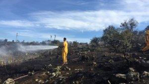 Dikili'de 1 hektarlık alan yandı
