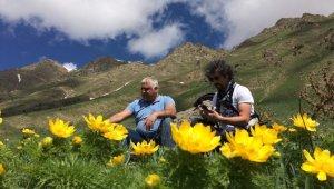 Neslinin tükendiği sanılan Horoz Gülü Tunceli'de çıktı